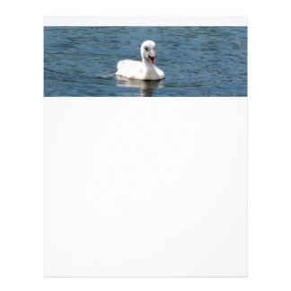 Letterhead with photo of cute, sassy baby swan