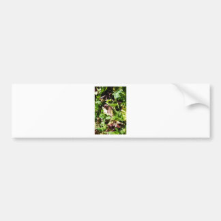 Lettuce Bumper Sticker