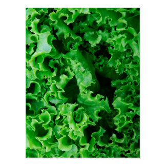 Lettuce Close Up Print - Weird Unique Gift Postcard