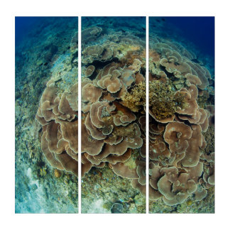 Lettuce Coral Reef Triptych