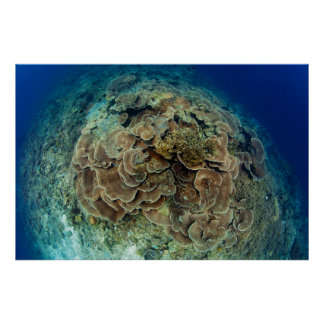 Lettuce Coral Reef View Poster