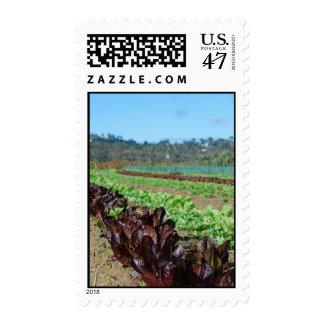 Lettuce depth-of-field stamp