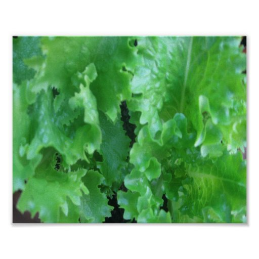 Lettuce=Fresh Food Print