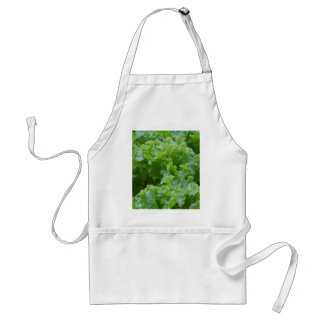lettuce in the garden adult apron