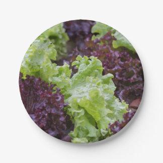 lettuce in the garden paper plate