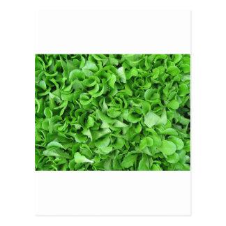 lettuce lovers postcard