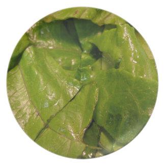 Lettuce Melamine Plate