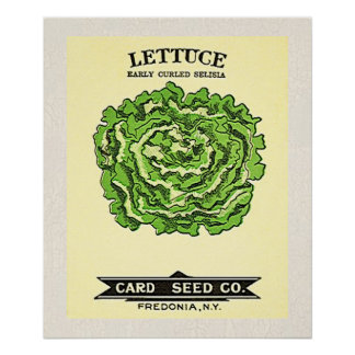 Lettuce Seeds Card Seed Company Poster