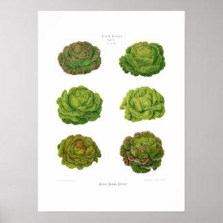 Lettuces Print