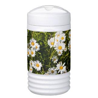 Leucanthemum Vulgare Enfriador De Bebida Igloo