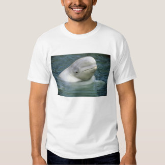 Leucas de la ballena, del Delphinapterus de la Camisas