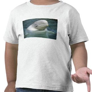 Leucas de la ballena, del Delphinapterus de la Camisetas