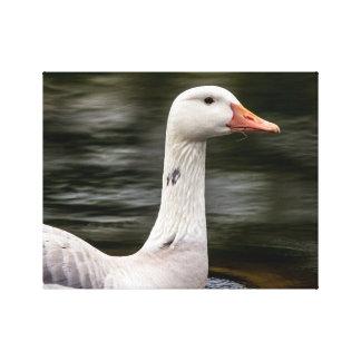 Leucistic Canadian Goose Canvas Print