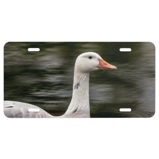Leucistic Canadian Goose License Plate