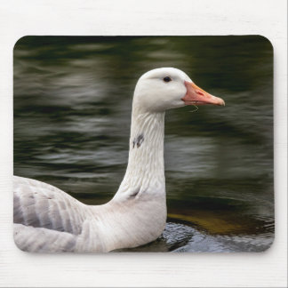 Leucistic Canadian Goose Mouse Pad