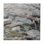 Leucura atado blanco del Lagopus de la perdiz niva Teja Cerámica