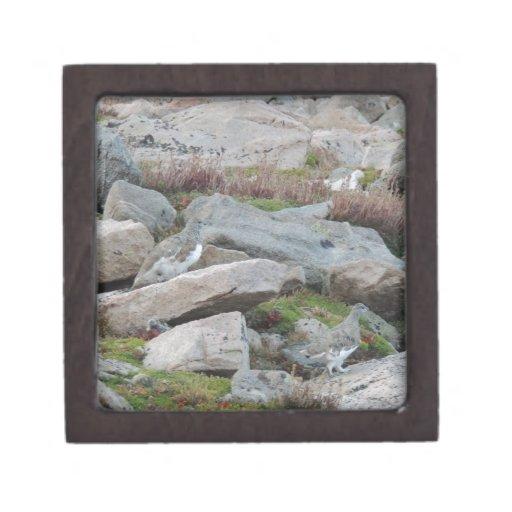 Leucura atado blanco del Lagopus de la perdiz niva Cajas De Recuerdo De Calidad