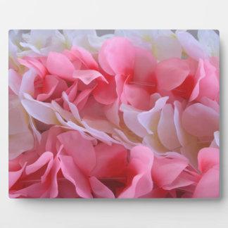 leus blancos rosados placas con foto