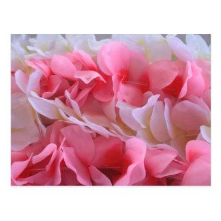 leus blancos rosados postal