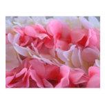 leus blancos rosados tarjetas postales