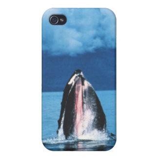 Levantamiento de la ballena jorobada iPhone 4 protector
