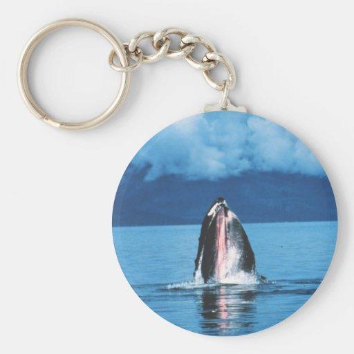Levantamiento de la ballena jorobada llavero redondo tipo pin