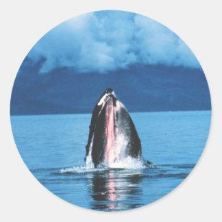 Levantamiento de la ballena jorobada pegatina redonda