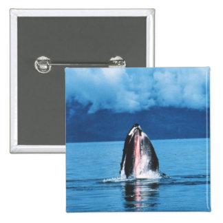 Levantamiento de la ballena jorobada pins