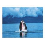 Levantamiento de la ballena jorobada tarjeta postal