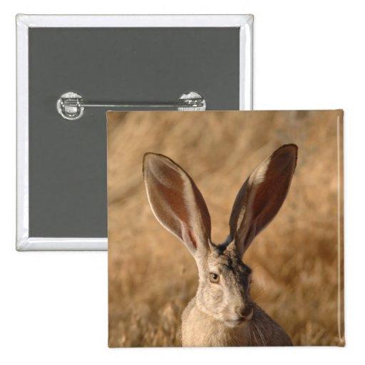 Levante el conejo con el botón grande del pinback  pins