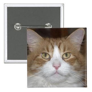 Levante el gato de coon nacional de Maine del nara Pin