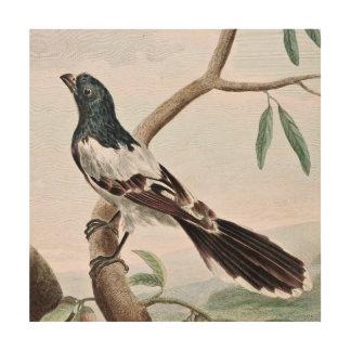 Leverian Shrike Bird Vintage Painting Wood Canvases
