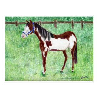 Levi Paint Horse Postcards