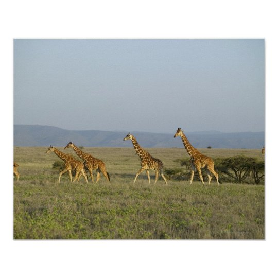 Lewa Wildlife Conservancy, Kenya Poster