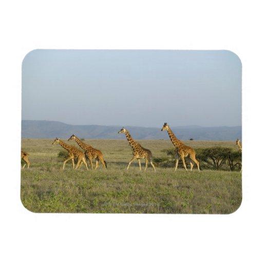 Lewa Wildlife Conservancy, Kenya Rectangular Photo Magnet