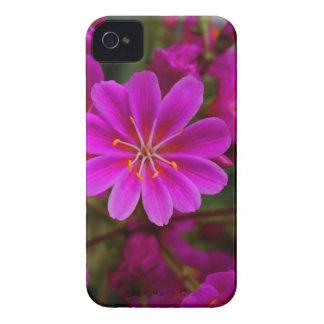 Lewisa II Case-Mate iPhone 4 Case