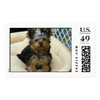 Lexi Postage Stamp