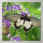 Leyenda de la impresión del poster de las mariposa
