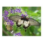 Leyenda de la postal de las mariposas