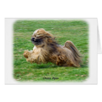 Lhasa Apso 9P30D-205 Greeting Cards