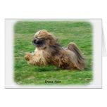 Lhasa Apso 9P30D-205 Greeting Card