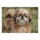 Lhasa Apso Dog Note Cards