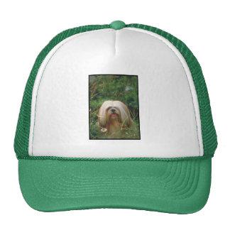 Lhasa Apso Hats