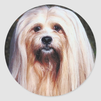 Lhasa Apso Sticker