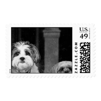 Lhaso Apso x Yorkie and a Poodle x Shitzu Stamp