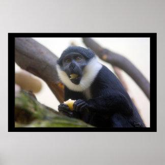L'Hoest Monkey Print