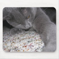Liath Mhor was adopted! Mousepads