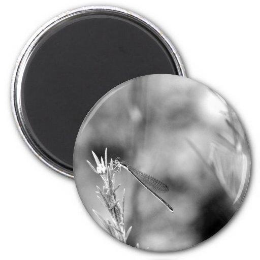 Libélula 2,0 imán redondo 5 cm