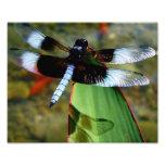 libélula 8x10 con Blue Wings y con la sombra Arte Con Fotos