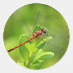 Libélula aterrizada en la planta de jardín verde pegatina redonda